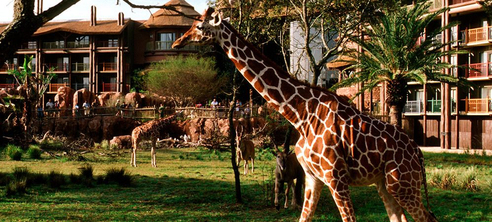 resorts animal kingdom villas kidani