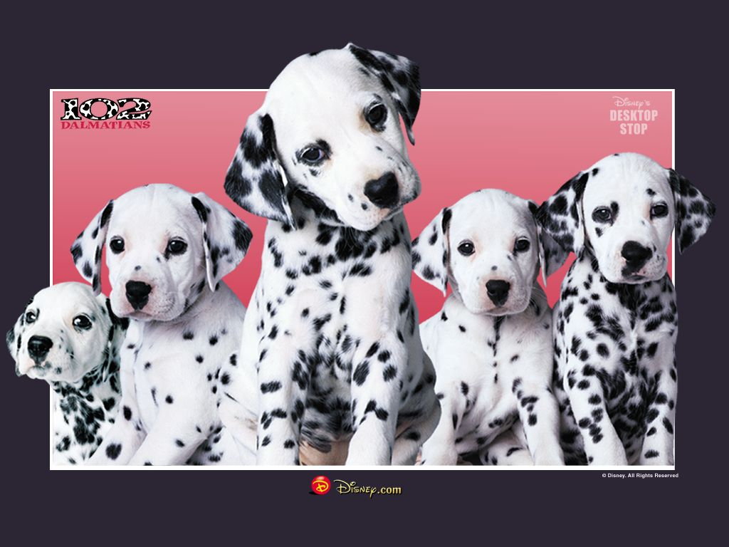 free 102 dalmatians desktop